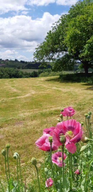 wandelen in de natuur Tours sur Meymont Auvergne Livradois Forez
